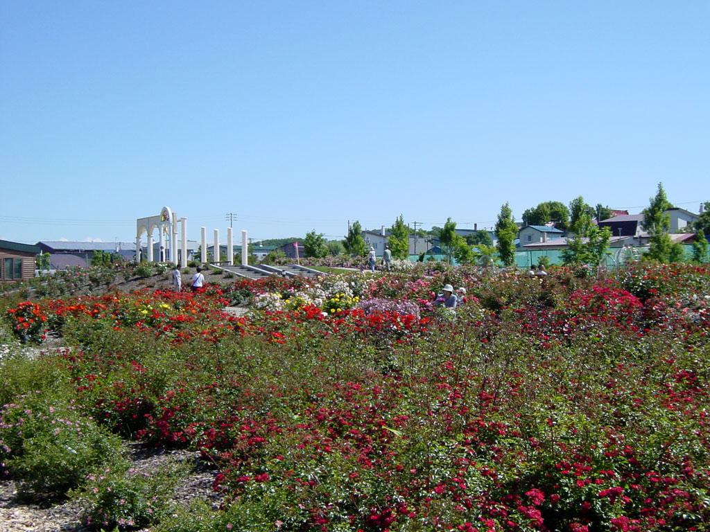 羽幌バラ園