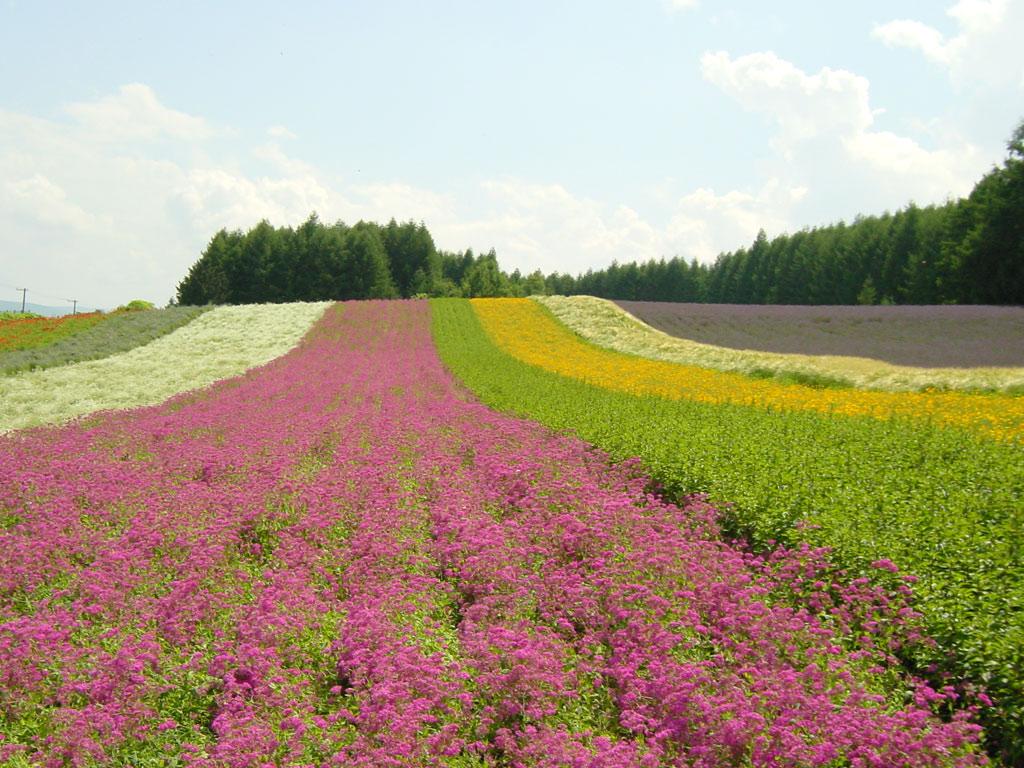 ファーム富田の彩りの畑