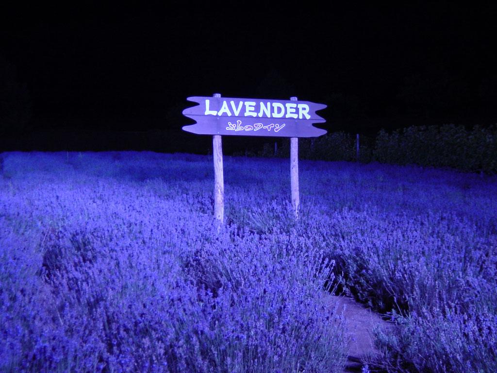 富良野ワイン工場のラベンダーのライトアップ