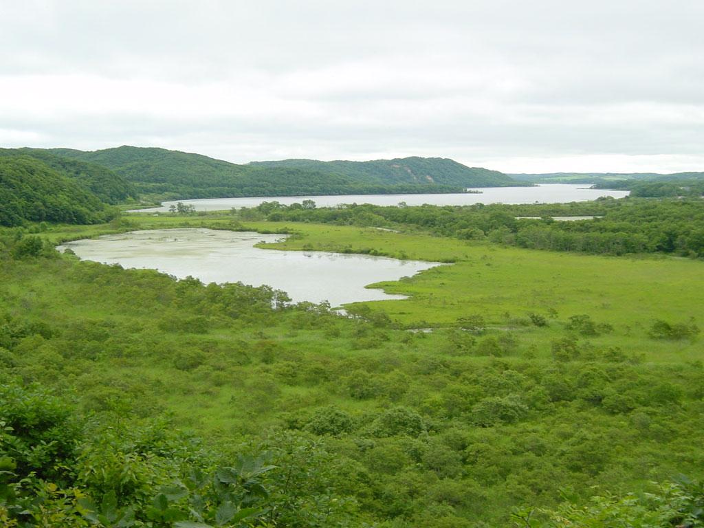 釧路湿原 二本松展望地