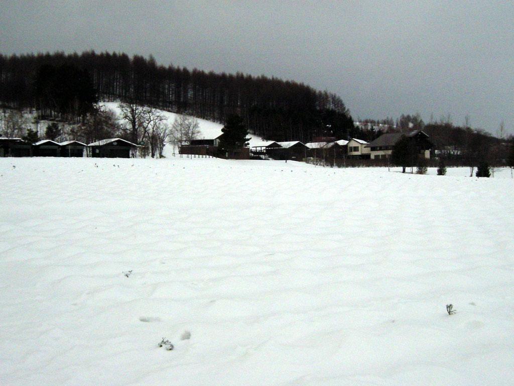 冬のファーム富田