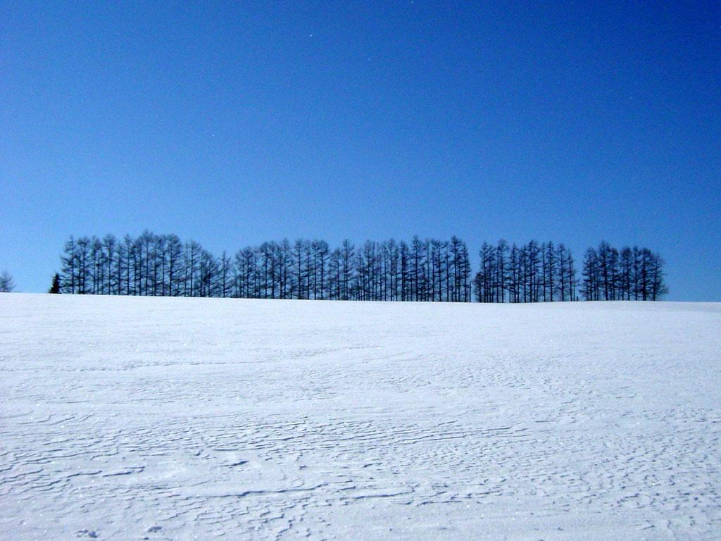 マイルドセブンの丘 冬