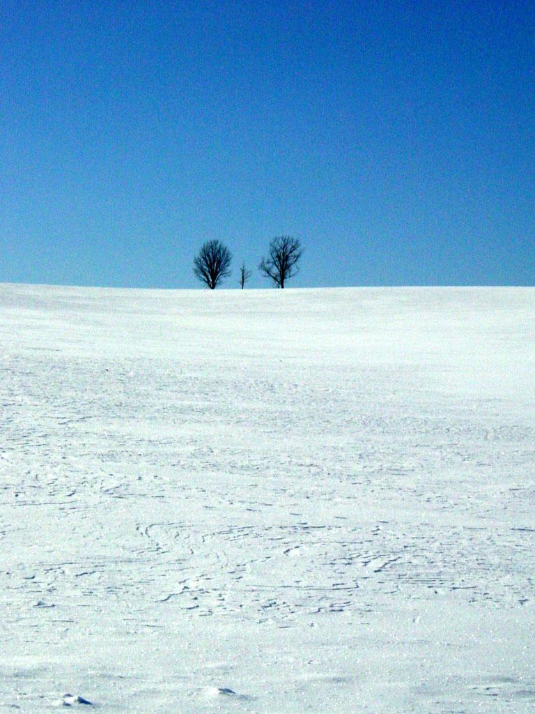 親子の木 冬