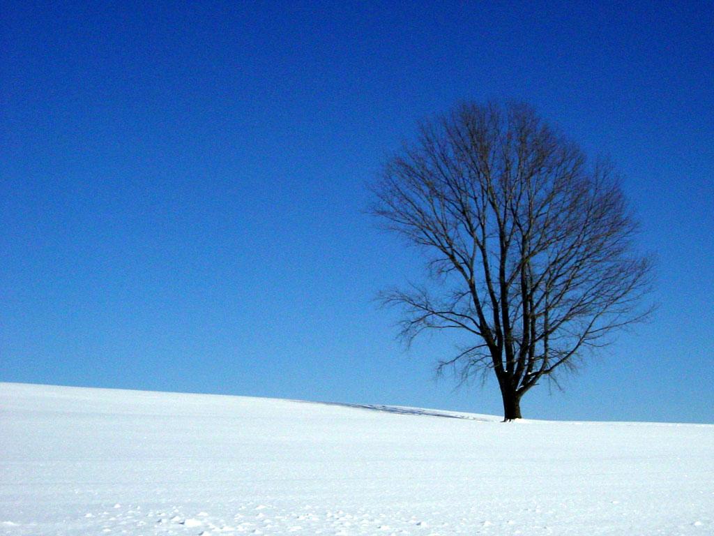 哲学の木 冬