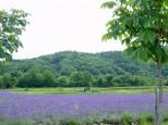 太陽の里のラベンダー畑