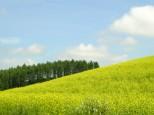 キカラシの丘