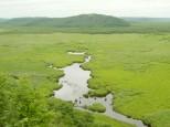 コッタロ湿原