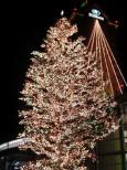 ウイングベイ小樽のクリスマスツリー