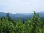 三国峠から見る樹海
