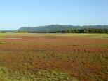 キムアネップ岬のサンゴ草