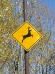 動物飛び出し注意の標識