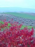 紅葉のナナカマドと豆ニオ