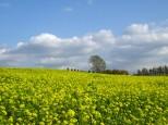 キカラシ畑と哲学の木