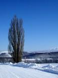 ケントメリーの木 冬