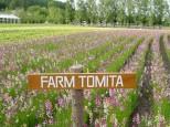ファーム富田の花人の畑