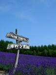 ファーム富田 トラディショナルラベンダー畑