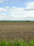 十勝平野の畑