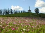 千代田の丘展望台のコスモス