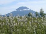 羊蹄山とススキ