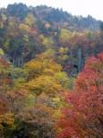 天人峡の紅葉