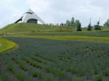 北西の丘展望台のラベンダー畑